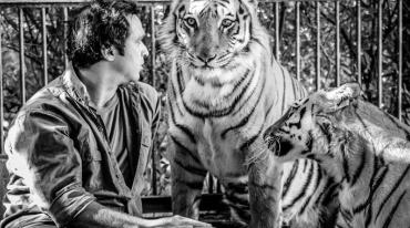 A man sits in a cage with two young tigers. He is turned towards the female tiger, who is in the middle, and is speaking to her. She is looking into the camera. The second tiger, seen in profile, looks on amiably.